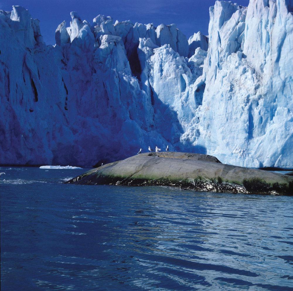 Hav med fjære og isbre i bakgrunn