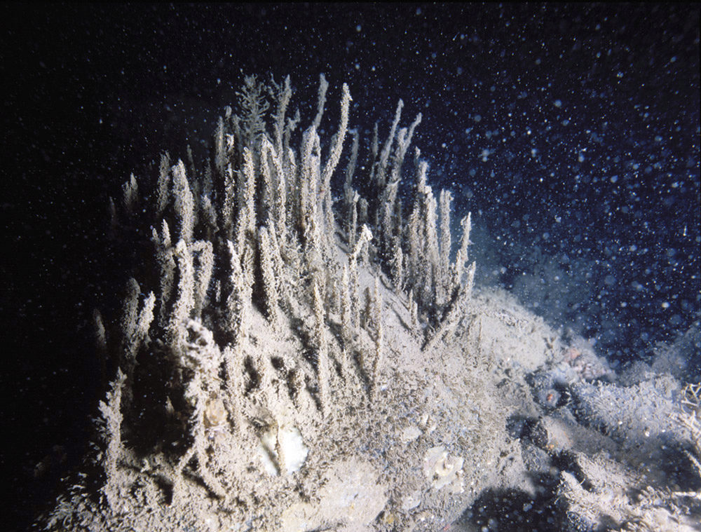 benthos dekket med sediment