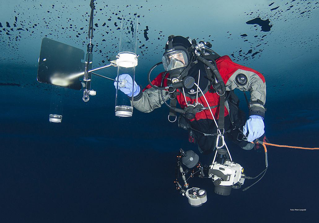 diver under the sea surface
