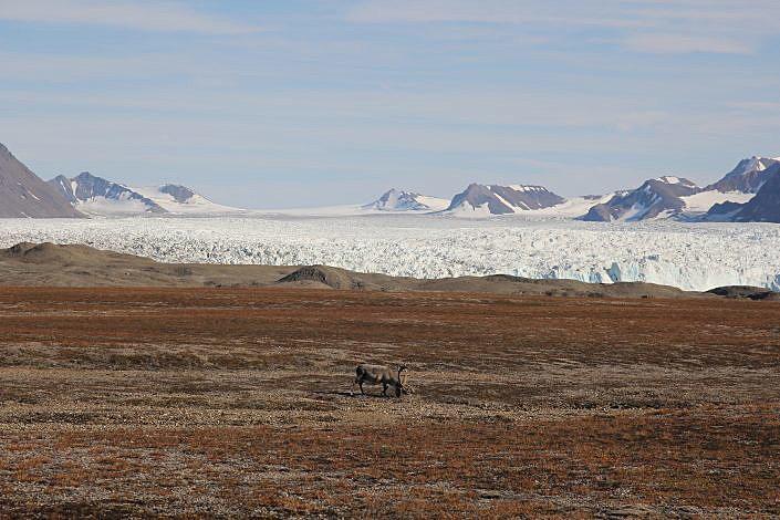 Vegetasjonsslette med snedekte fjell i bakgrunnen