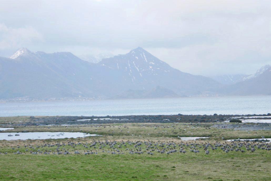 Fugletrekk med fjord og fjell i bakgrunnen