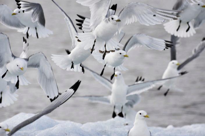 gruppe flyvende fugler