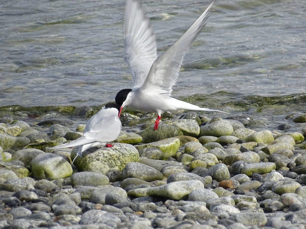 To fugler i fjæra