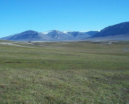 grønn slette med fjell i bakgrunnen