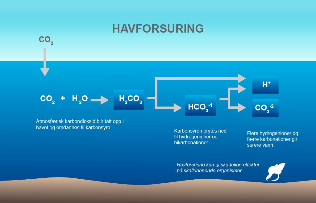 karbonatsystemet