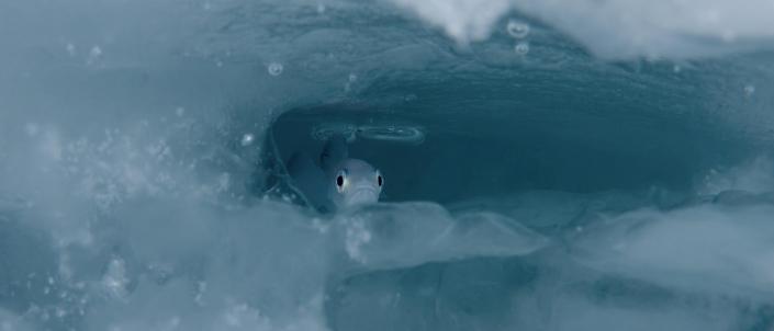 polartorsk i isen
