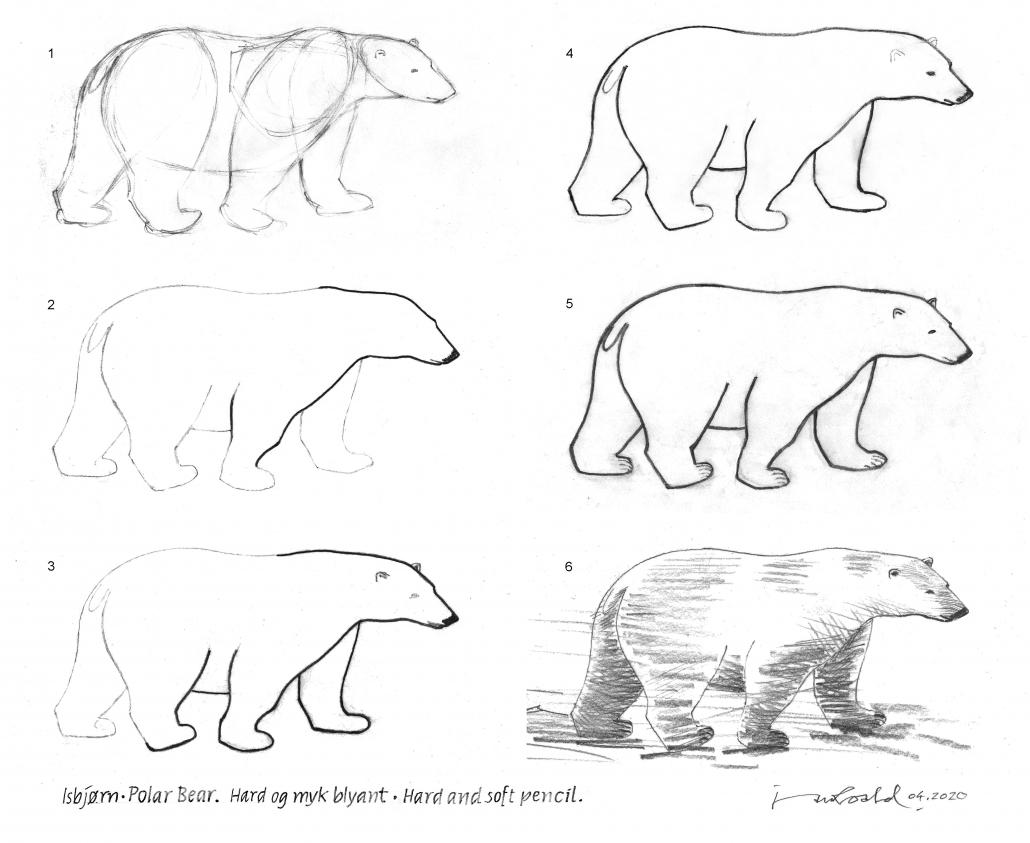 isbjørntegning steg for steg