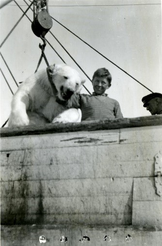 Boy posing with a polar bear hanging by the neck from a ship deck.