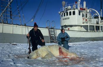 To personer sitter på huk bak en skutt og død isbjørn. I bakgrunnen en båt.