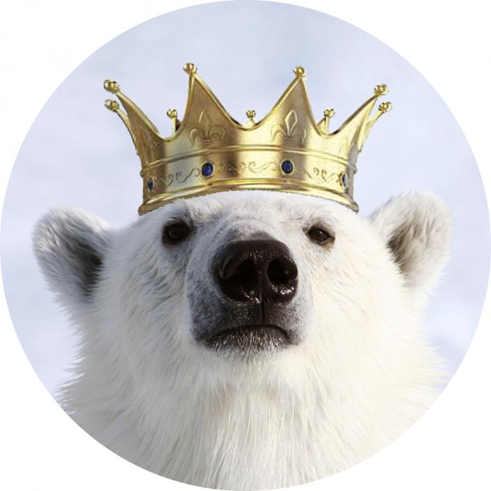 isbjørn med photoshoppet krone på hodet