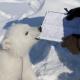 isbjørnunge spiser på en notatblokk