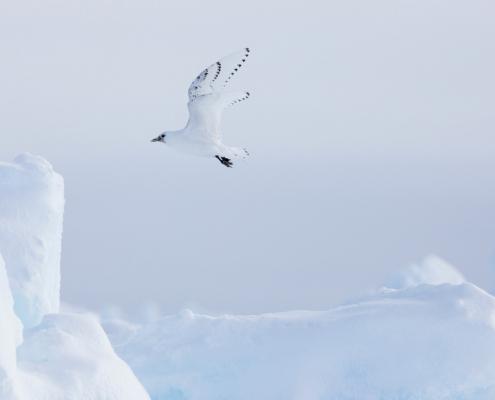 fugl som flyr