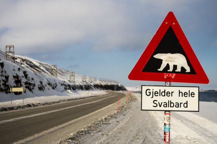 varselskilt isbjørn