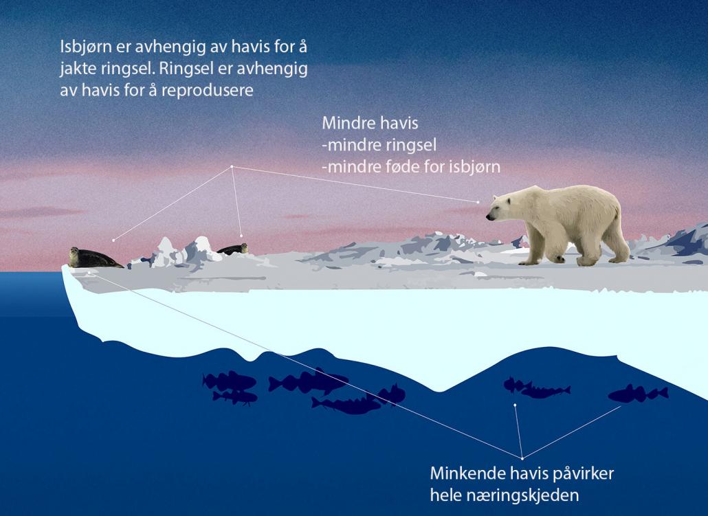 Plakat om havisens som smelter
