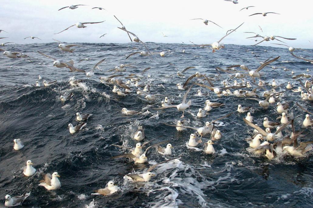 mange fugler som stimer sammen på havoverflaten