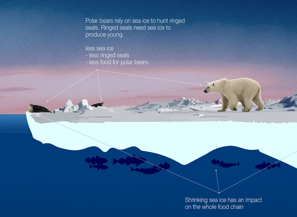 Poster showing an illustration of a polar bear on sea ice, explaininghow shrinking sea ice has an impact on the bears food chain ea ice decreases, causing problems for the polar bear that hunts seals on the ice.