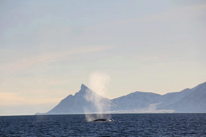 Bluewhale with mountains in the background.