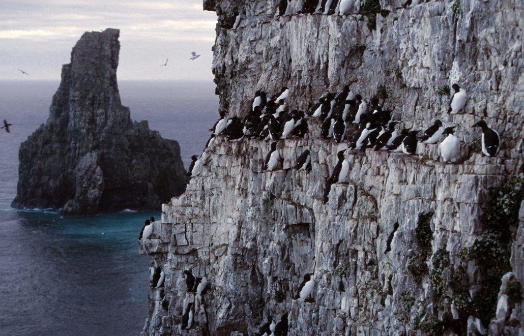 Fugler i fjellside